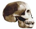 Piltdown Man Skull